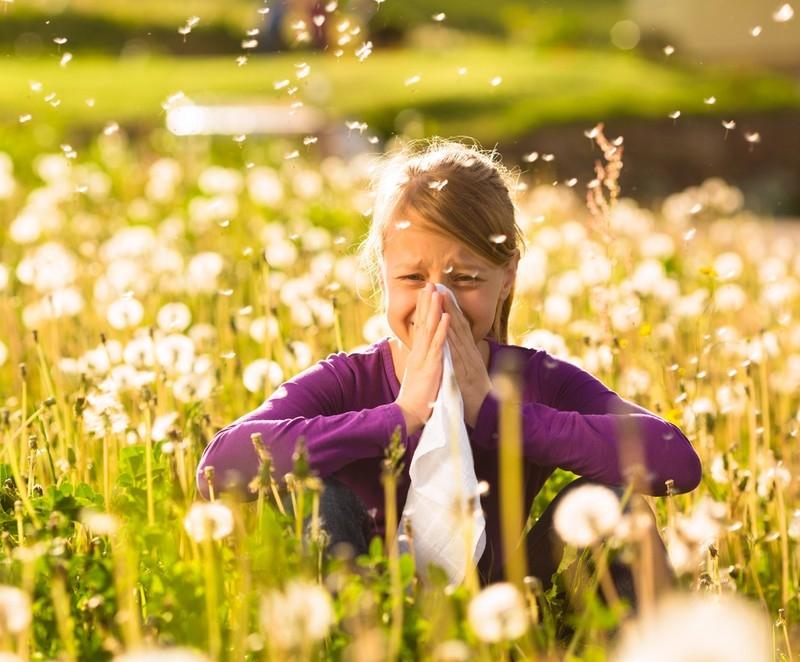 Emelkedik a pázsitfűfélék és a kora nyári gyomok pollenkoncentrációja