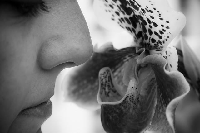 Több agysejt, pontosabb szaglás?