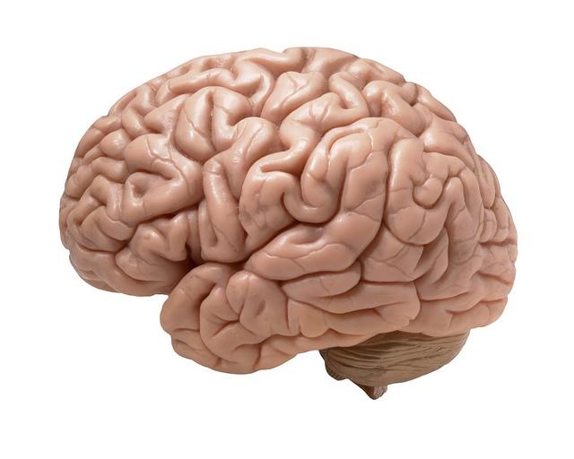 Jók a magyar agykutatók eredményei