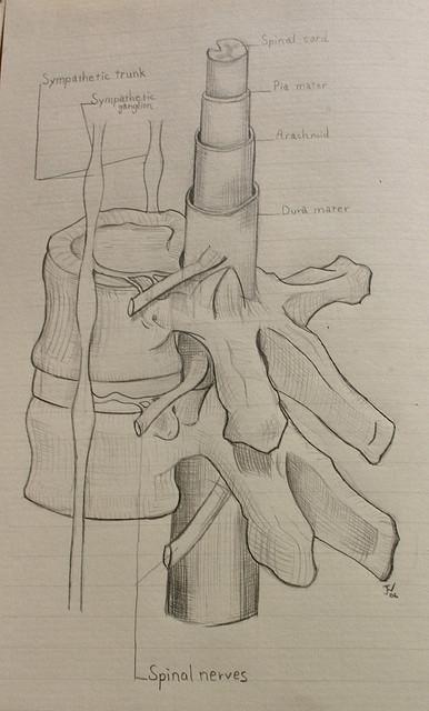 A krónikus fájdalmat gerincvelő implantátummal gyógyítják