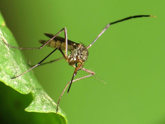 A zikavírus miatt Florida egyes megyéiben egészségügyi szükségállapotot hirdettek