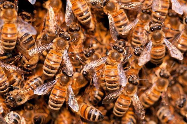 A méh- vagy darázscsípés életveszélyes is lehet