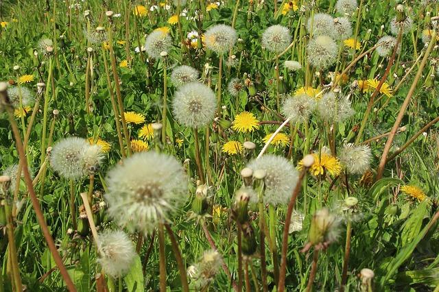 Ezen a hétvégén is magas a pollenkoncentráció