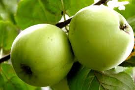 Dietetikus: ősszel fontos a vitaminpótlás