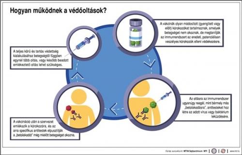 Hogyan működnek a védőoltások?